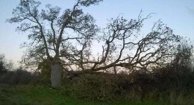 20151121_fallen_tree_eco_park_1000