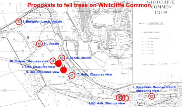 Whitcliffe_tree_plan