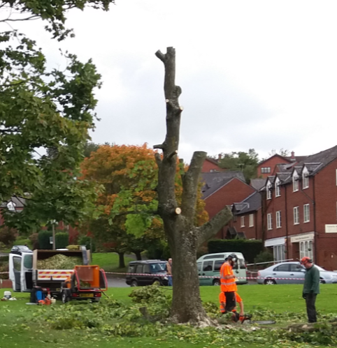 sidney_road_felled_tree